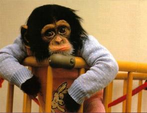 monkey-sad