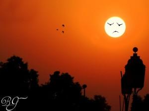 sole e viso di uccelli-tumblr_mwa97vVopT1sc613po1_500