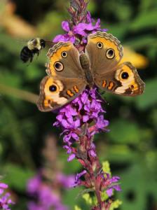 ButterflyOrFlower